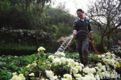 学生夫妻隐居山林垦荒种花:怎么样都是一辈子