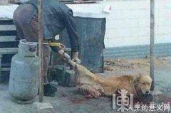 狗肉馆当街活卸金毛犬四腿 令人发指的畜生!