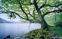 为什么像川端康成、海明威、三岛由纪夫之类的作家最后选择了自杀?