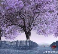 王小波回答恋人的问题:人为什么活着