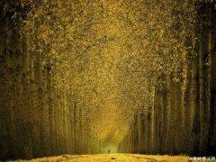 人生感悟:人活到一定的境界一定是简单朴素的