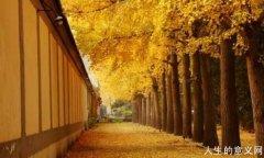 人生哲学传统经典|禅宗的人生三境界