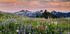 我为何如此热爱野花开遍的山坡?