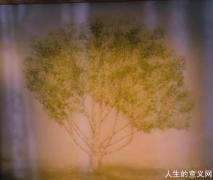 天空中的梧桐树