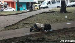 小女孩跪地舔水喝 照片震惊全世界成人