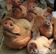 你是愿意做痛苦的哲学家还是快乐的猪?