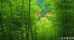 竹海幽居,心灵的故乡
